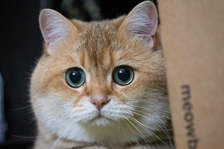 Кемеровский школьник изобрёл фитнесс-ошейник для кота-диабетика